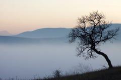 在有薄雾的秋天日的结构树 库存照片
