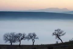 在有薄雾的秋天日的结构树 免版税图库摄影