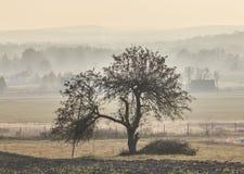 在有薄雾的秋天风景中间的一棵偏僻的树 库存图片