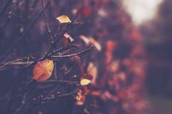 在有赤裸灌木的阴沉的被放弃的公园落 免版税图库摄影