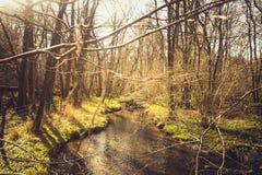 在有跑通过光秃的树和机器寿命的一条小小河的森林环境美化本质上 免版税库存照片