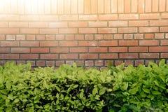 在有阳光的公园围住在绿色灌木的砖和圈子白色窗口 地道树灌木离开墙纸细节patt 图库摄影