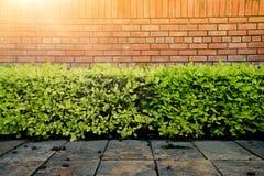 在有阳光的公园围住在绿色灌木的砖和圈子白色窗口 地道树灌木离开墙纸细节patt 库存照片