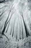 在有雪低谷树的冬天森林里供以人员走 库存照片