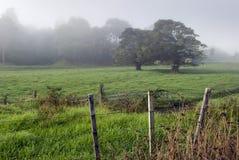 有雾的农田,新西兰 免版税库存照片