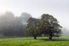 有雾的农田,新西兰 库存照片