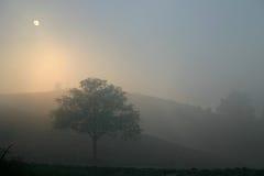 在有雾的日落和遥远的小山的偏僻的结构树 库存图片