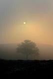 在有雾的日落的偏僻的结构树 免版税库存照片