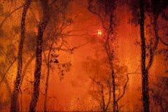 在有雾的日落的看法在森林里 库存图片