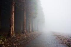 在有雾的森林附近的乡下公路 免版税库存照片