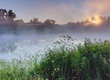 在有雾的湖的日出 免版税图库摄影