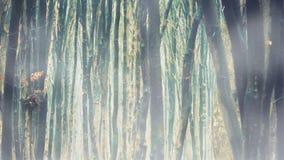在有雾的秋天森林的降雨 股票录像