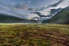 在有雾的谷的新伐草 库存图片
