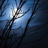 在有雾的黑暗的夜、赤裸不生叶的树剪影和云彩,万圣夜题材背景,可怕月光风景的满月 免版税库存照片