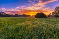 在有雾,不可思议的草甸的充满活力的夏天日出 库存照片