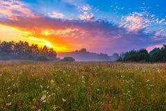 在有雾,不可思议的草甸的充满活力的夏天日出 免版税库存照片