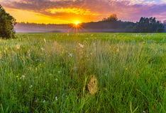 在有雾,不可思议的草甸的充满活力的夏天日出 图库摄影