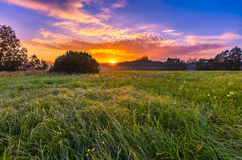 在有雾,不可思议的草甸的充满活力的夏天日出 库存图片