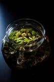 在有食肉动物植物的一个瓶子做的玻璃容器 免版税图库摄影