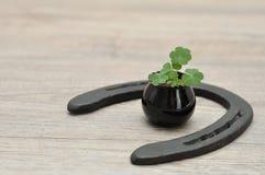 在有马鞋子的一个小黑罐种植的三叶草 库存照片