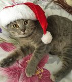 在服装的猫 免版税库存照片