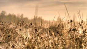 在朝阳的光芒的蜘蛛网 免版税图库摄影