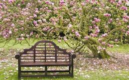 在木之下的开花的木兰位子结构树 库存图片