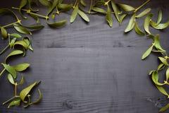 在木书桌上的绿色槲寄生 背景蓝色云彩调遣草绿色本质天空空白小束 圣诞节 免版税库存图片