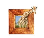 在木制框架的长颈鹿与3d作用 图库摄影