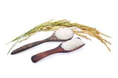 在木匙子的白米和在白色隔绝的未磨碎的米 免版税库存照片
