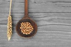 在木匙子的麦子五谷 库存照片