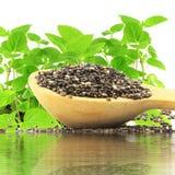 在木匙子的Chia种子有chia植物和水反射的 库存照片