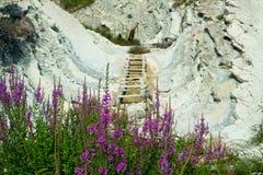 在木台阶背景的花在克拉斯诺达尔地区山的  图库摄影