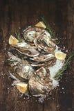 在木和海盐的十二只新鲜的牡蛎 顶视图 库存照片