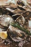 在木和海盐的十二只新鲜的牡蛎 顶视图 免版税图库摄影