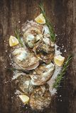 在木和海盐的十二只新鲜的牡蛎 顶视图 库存图片