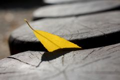 在木困住的黄色秋天叶子注册秋天天 免版税库存照片
