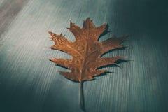 在木土气背景的橡树叶子 与橡木的老难看的东西木头离开作为背景 免版税图库摄影