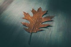 在木土气背景的橡树叶子 与橡木的老难看的东西木头离开作为背景 免版税库存照片