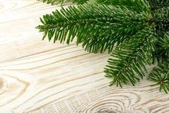 在木土气背景的自然绿色云杉的枝杈 免版税库存照片
