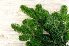 在木土气背景的自然绿色云杉的枝杈 图库摄影