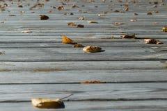 在木地板上是下落的叶子黄色和橙色 免版税图库摄影