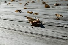 在木地板上是下落的叶子黄色和橙色 免版税库存照片