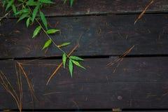 在木地板上的叶子 免版税库存照片