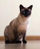 在木地板上的坐的猫 免版税库存照片
