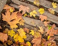 在木地板背景的秋叶 免版税库存图片