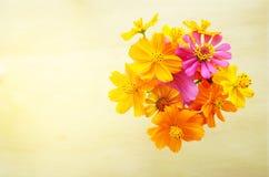 在木地板背景的顶视图美丽的黄色波斯菊花 免版税库存图片