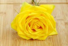 在木基地的一朵美丽的黄色玫瑰 库存图片
