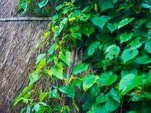 在木墙壁上的叶子 免版税库存照片