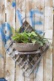 在木墙壁上的植物 免版税库存照片